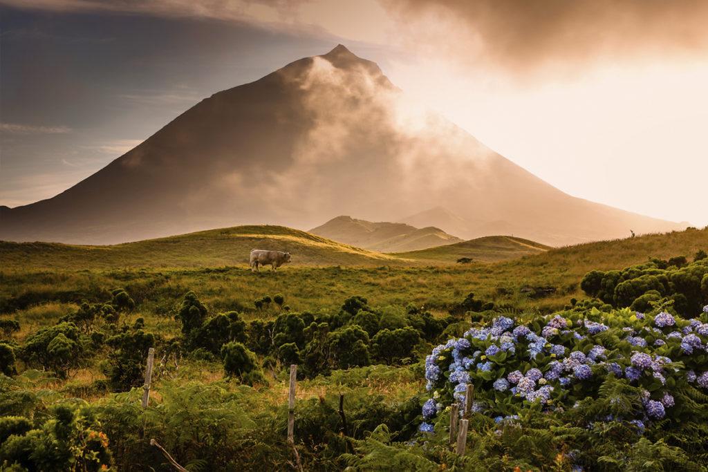Isla del Pico, esta isla es perfecta para el avistamiento de ballenas, delfines y cachalotes. (iStock)