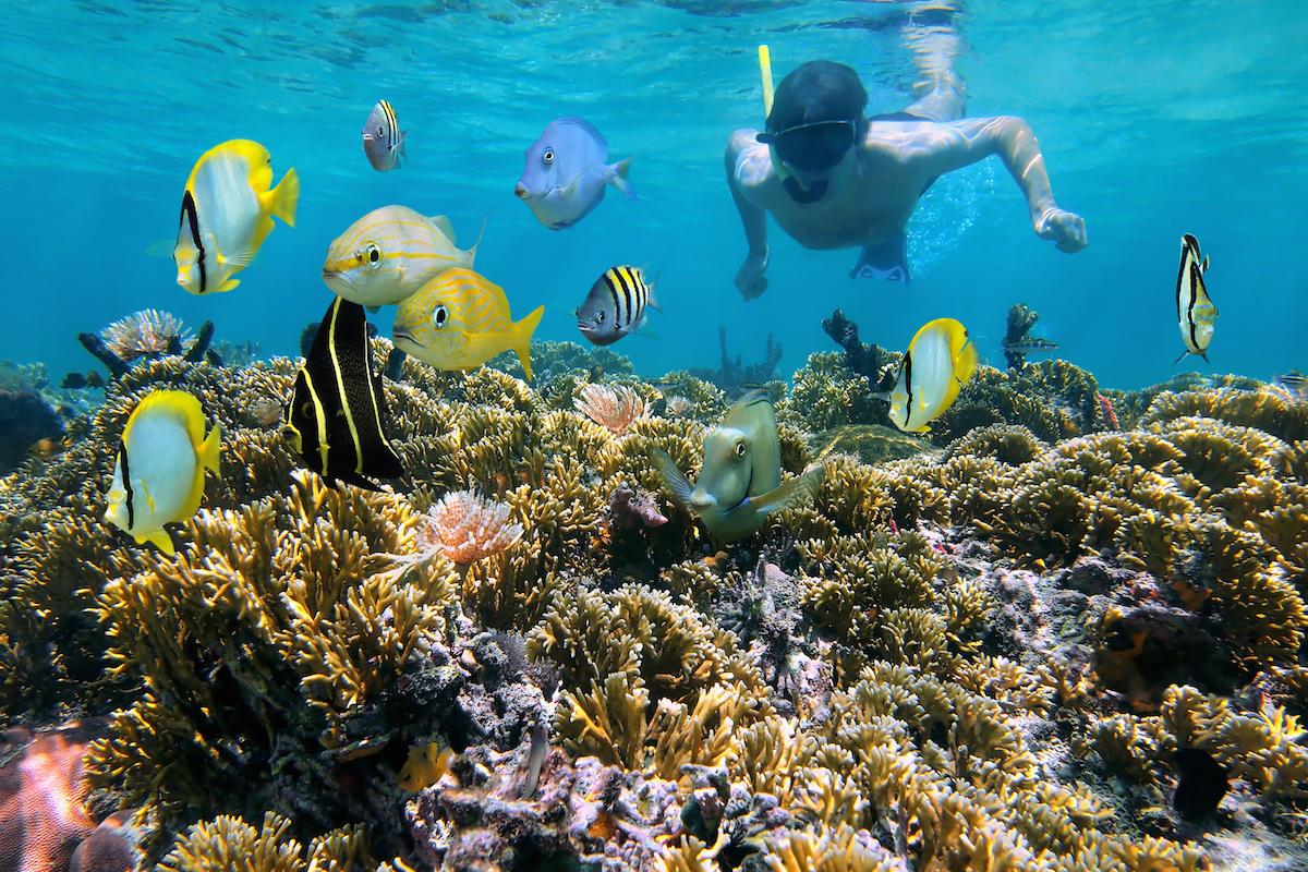 Los fondos marinos de Zapotal hacen las delicias de los aficionados al snorkel (iStock).
