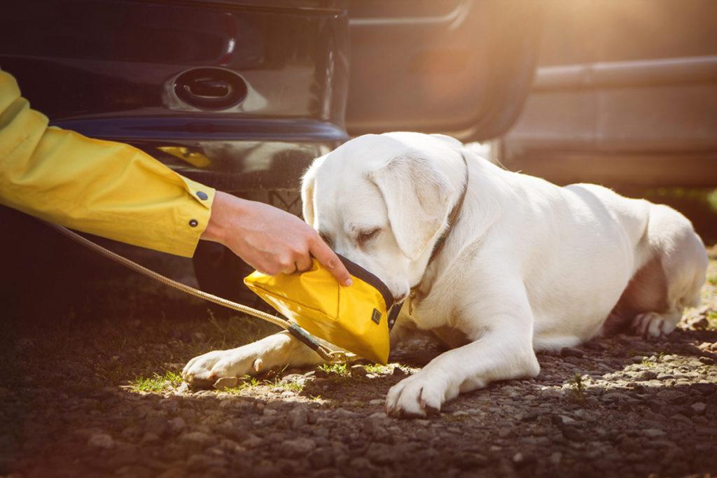 Un perro bebe agua (iStock)