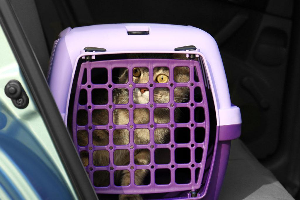 Un gato en un transportín (iStock)