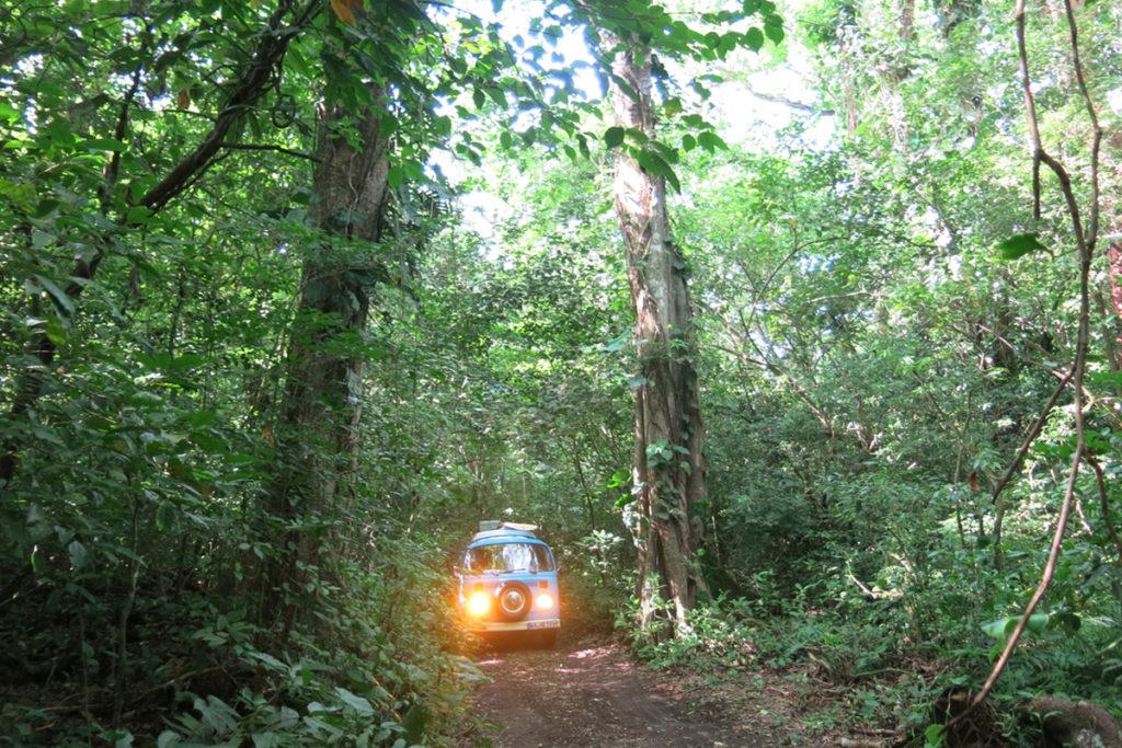 Nanciyaga es una reserva ecológica alberga un parque de diversión pensado para adultos que aman la naturaleza (iStock)