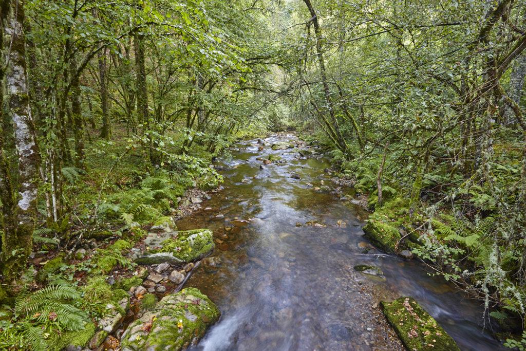 La Reserva de Muniellos es una zona de especial protección de aves (iStock)