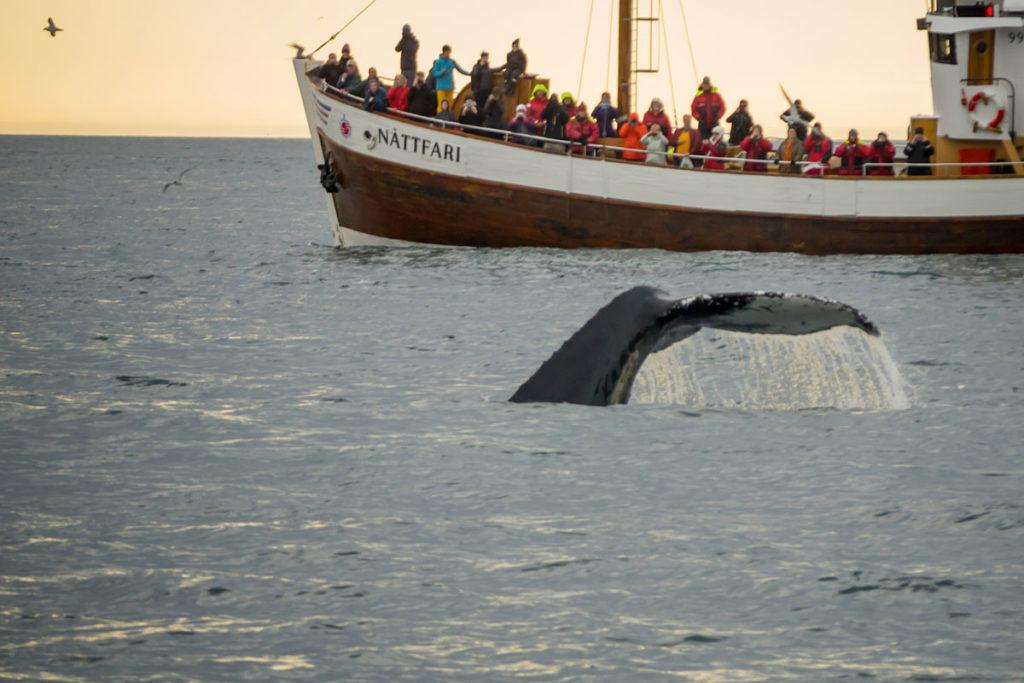 Hay muchas excursiones organizadas para ver ballenas (iStock)