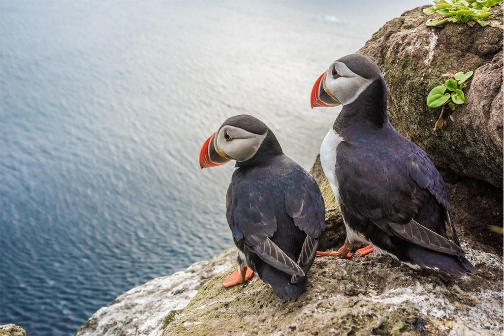 Hay más de 300 tipos de aves en Islandia (iStock)