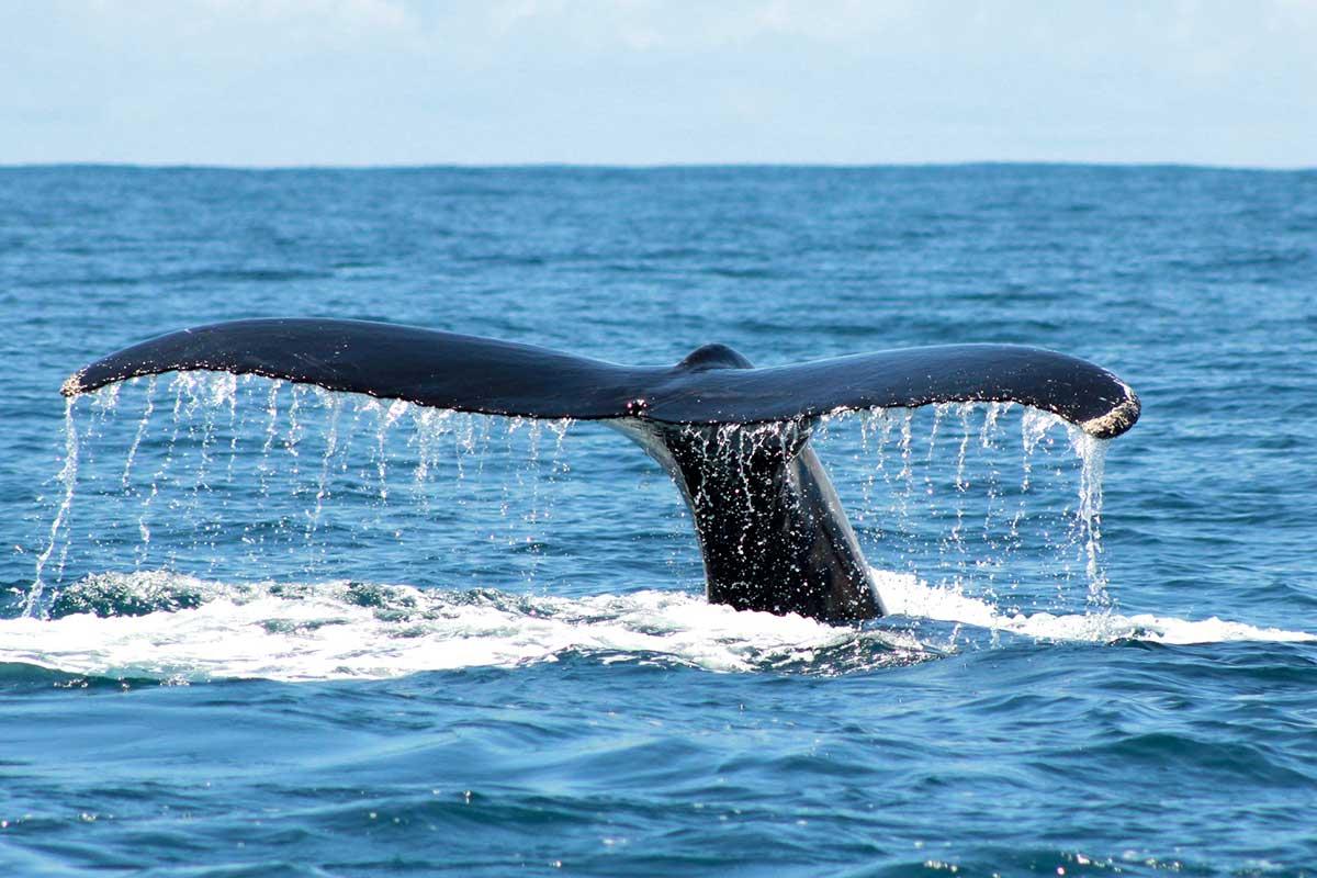 avistar ballenas en costa rica