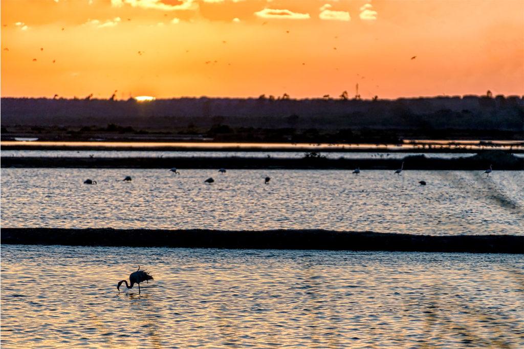 El Espacio Natural de Doñana comparte espacio de las provincias de Huelva, Sevilla y Cádiz (iStock)