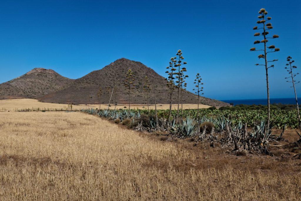 La Playa de las Negras está rodeada por varios peñascos (iStock)