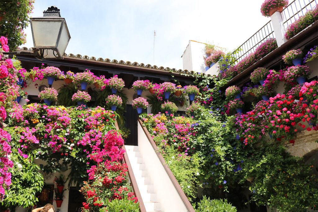 Mira, imagina el maravilloso olor que desprenden esas flores (iStock)