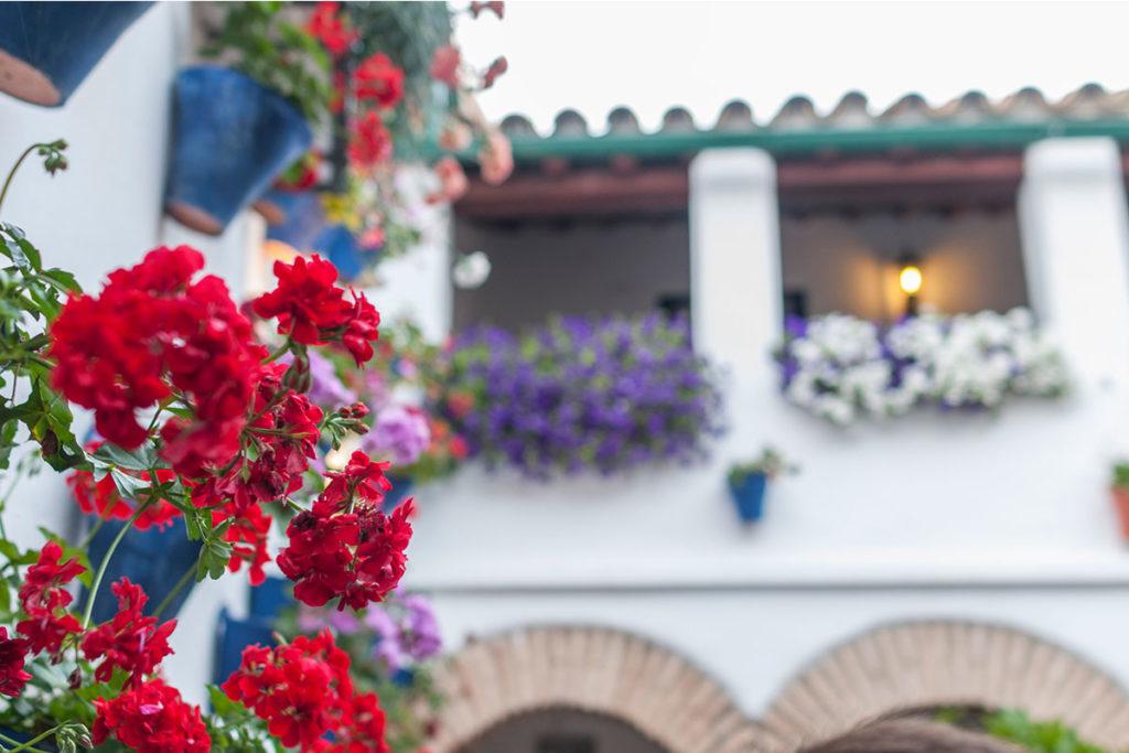 La belleza es la principal razón para no perderte el espectáculo de los patios cordobeses (iStock)
