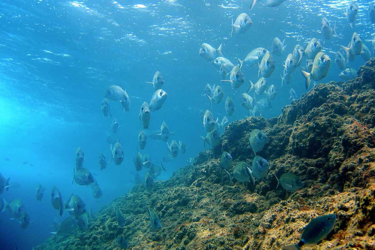 destinos de buceo en España
