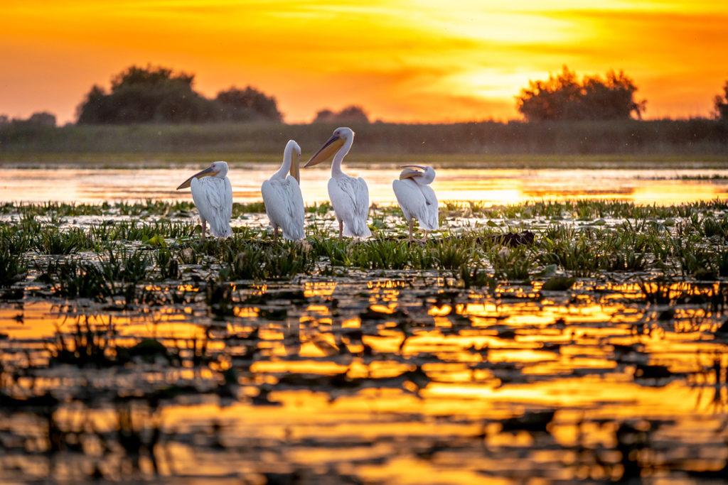Delta del Danubio (iStock)